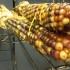 Corn (1)