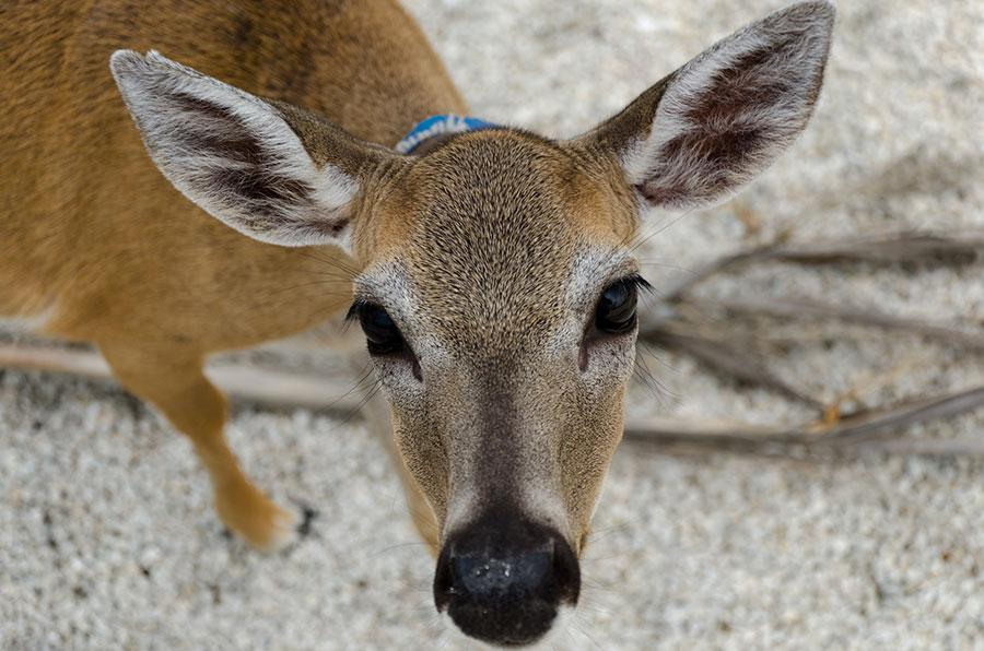Lizzy Davis '15, has the facial features and personality that can easily be compared to a deer.