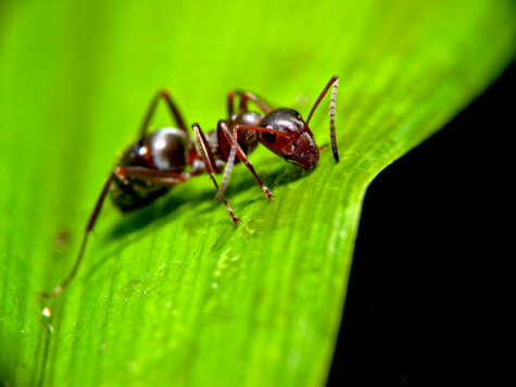 How to attract ants