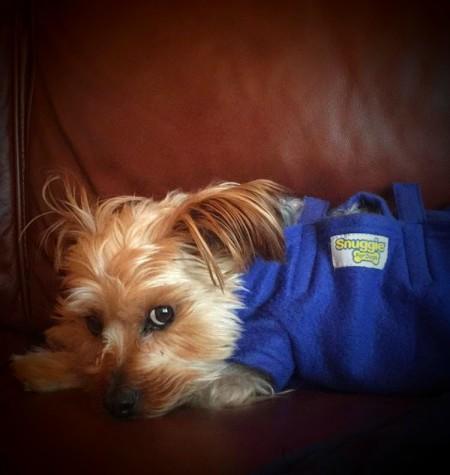 Teresa Randlett's dog, Monroe, sporting a snazzy snuggie