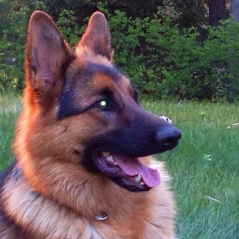 The Bertone's dog, Suki