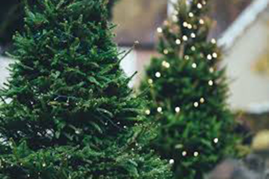 "As the passage of Thanksgiving officially starts the holiday season, many families have already begun buying Christmas trees. Decorating a tree as a family brings people together and gets everyone in the merry mood. ""I like all the decorations and the spirit that comes along with it,"" said Victoria Bruzik '20."