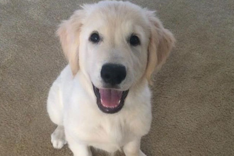 Dog of the week features the adorable pets of the Hollis-Brookline community with the goal of curating a collection of cute animal photos for everyone's enjoyment. Enjoy this week's dog of the week submitted by English teacher Heather Hamilton!