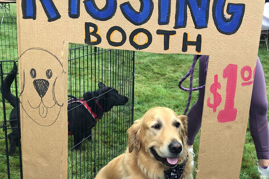 """Stanley, the adorable golden retriever, sits behind the soccer team's booth waiting for customers. This was taken at Old Homes day at the HBHS girls soccer booth. Abigail Ogren '22 said, """"Stanley is so cute!"""""""