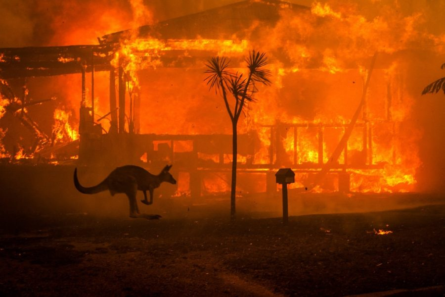 A+kangaroo+is+seen+running+past+a+house+that+is+engulfed+in+flames.+The+destruction+in+Australia+has+displaced+both+people+and+wildlife+in+New+South+Wales+and+Victoria.+%E2%80%9CSome+areas+will+never+recover+from+the+destruction%2C%E2%80%9D+said+Rodney+Clark.%0A