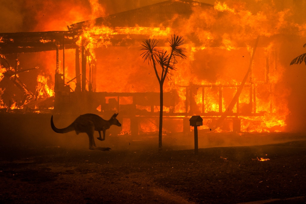 """A kangaroo is seen running past a house that is engulfed in flames. The destruction in Australia has displaced both people and wildlife in New South Wales and Victoria. """"Some areas will never recover from the destruction,"""" said Rodney Clark."""