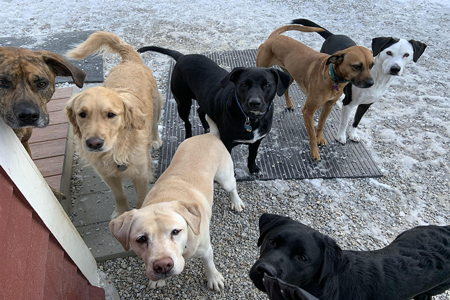 "Pictured at Village Sentry Pet Care, these furry companions are bringing a little more joy to everyone's day with every wag of their tails. ""[Dogs] love you no matter what and they make you feel happy when you're sad, they're loyal,"" said Joan Harper."