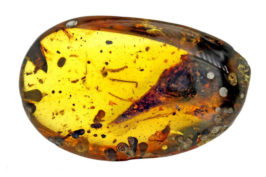 "A piece of amber holds the skeleton of the smallest dinosaur ever discovered. The fossil was discovered in Northern Myanmar in March. ""This [fossil] was so pristine and so well-preserved, this thing was super perfect,"" said Jingmai O'Connor, a paleontologist at China's Institute of Vertebrate Paleontology and Paleoanthropology."