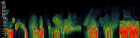 "The spectrogram of the final track on the album, ""Look."" A spectrogram is a way of visualizing audio as a frequency-time relationship graph, in this case used to hide pictures of cats inside the song. Generated with Sonic Visualizer."
